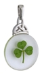 Real Shamrock embedded in Resin Pendant WBS44407